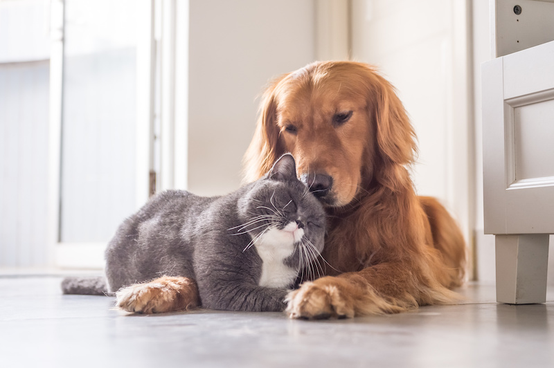 dog and a cat - pets in a divorce